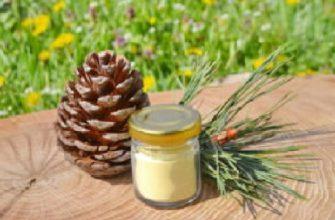 pyltsa-sosny-poleznye-svojstva-i-protivopokazniya