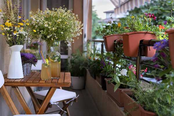 kakie-tsvety-posadit-na-balkone-i-terrase